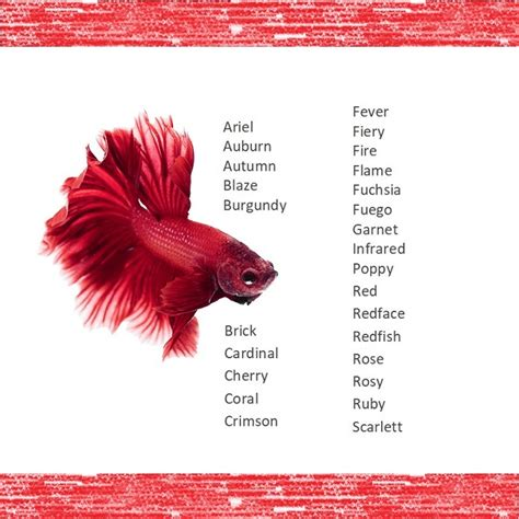 1001 Fish Names: The Most Comprehensive List - Fishkeeping
