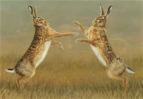 A Day In the Life of a Wildlife Artist: A Good Hare Day