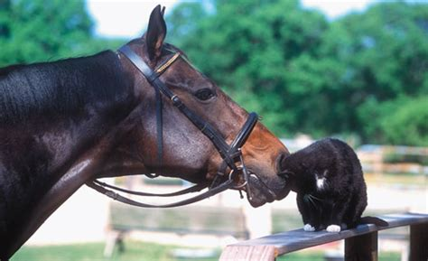English Horse Bridle Choices: Make it Simple - Expert
