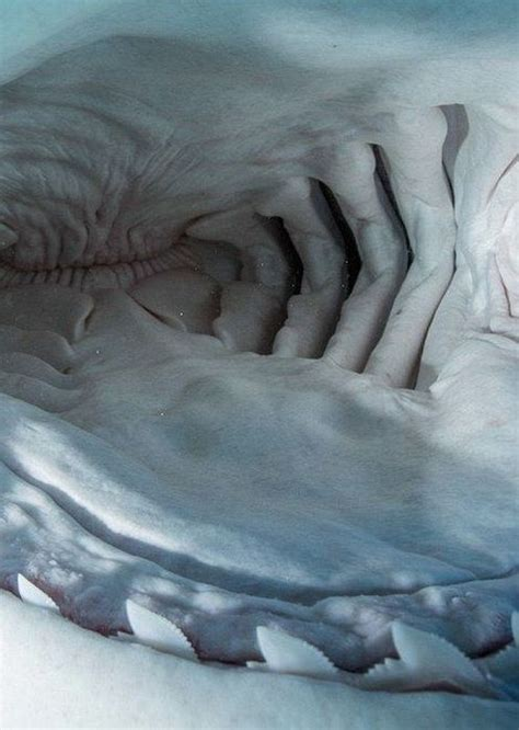 Inside The Mouth Of A Shark - Barnorama