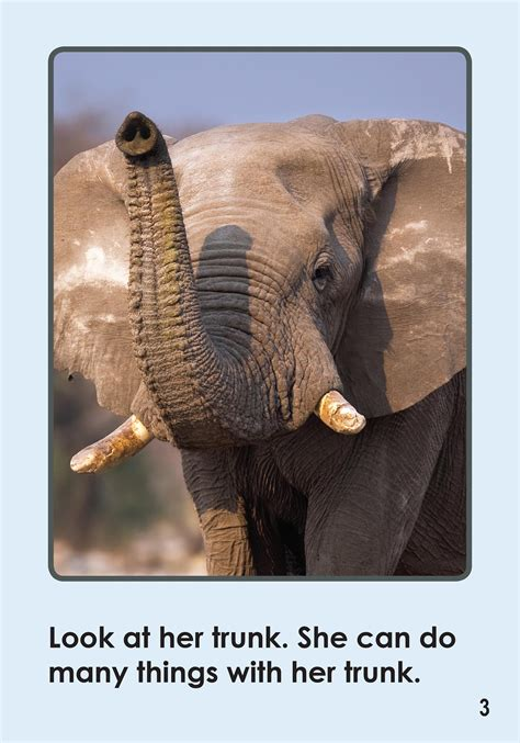The Elephant's Trunk by Gina Cline (9781634376501)