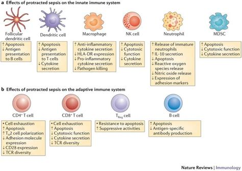 Impact of sepsis on innate and adaptive immune cells