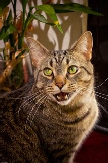 Cat Vocalizations: What Do They Mean? | Life with